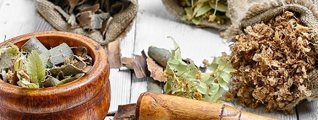 Лечебные свойства коры осины, применение настойки и отвара, противопоказания